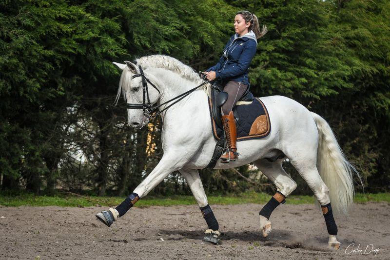 horse-gaits-trot