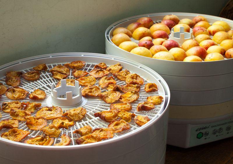 dried apricorts in food dehydrator