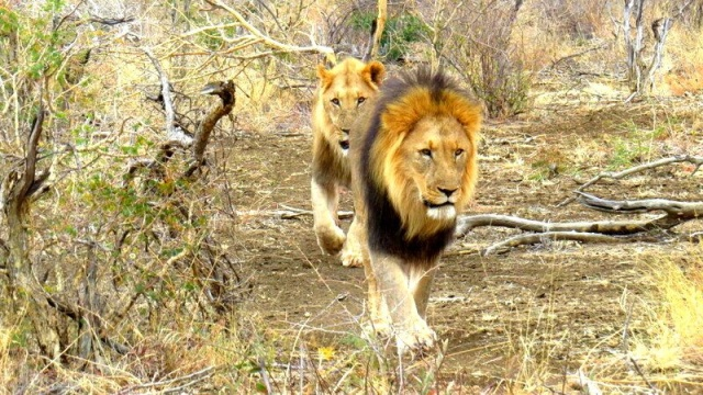 african countries for safaris: south africa