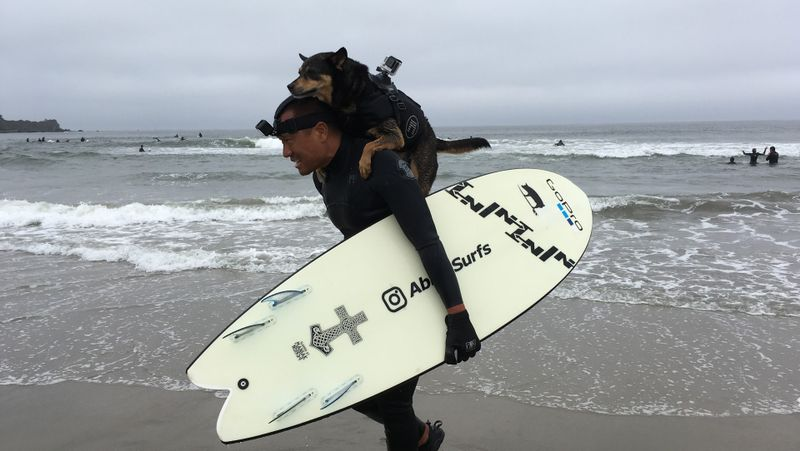 surfing-dogs