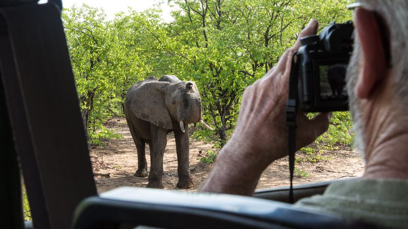 a safari tourist photographs an elephant in front of the car