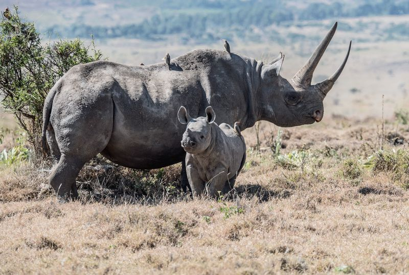 Rhino conservation safaris