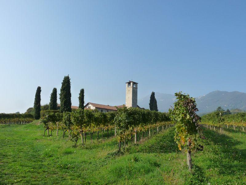 vineyard-bergamo