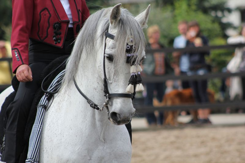 andalusian-horse-spain