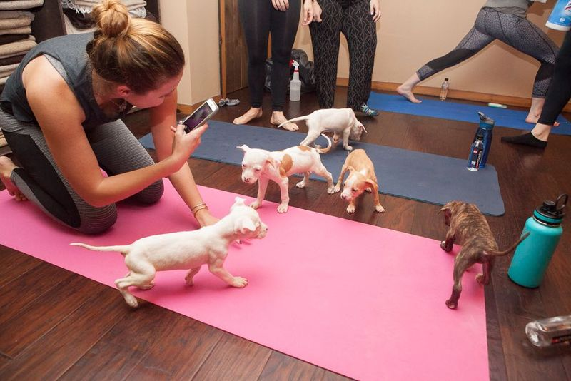woman doing yoga with puppies