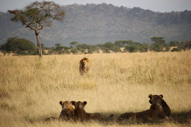 Budget safaris Africa
