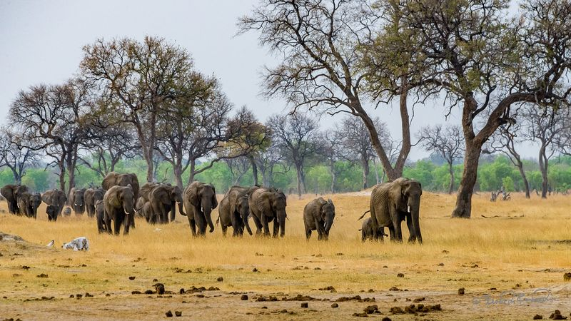 elephants in hwange national park zimbabwe
