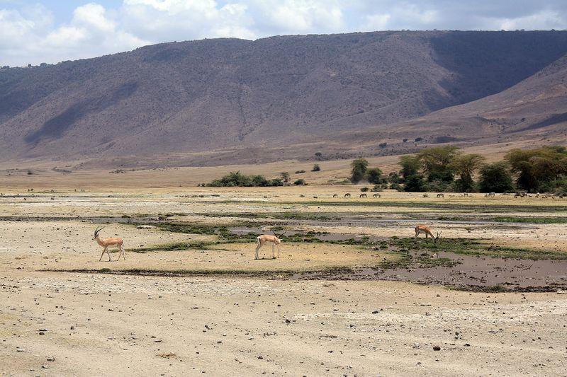 antelope in ngorongroro crater