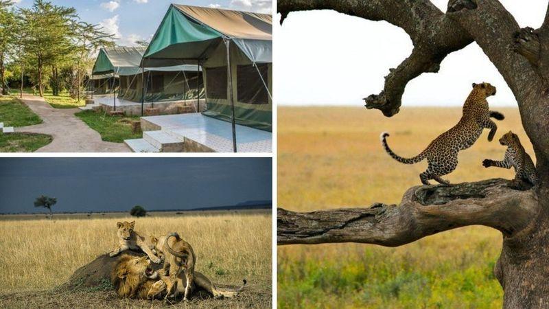 amboseli, masai mara, lake naivasha and lake nakuru safari