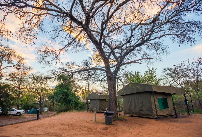 camp under the morning sky in Africa