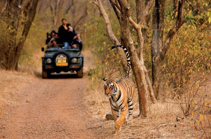 Ranthambore safaris