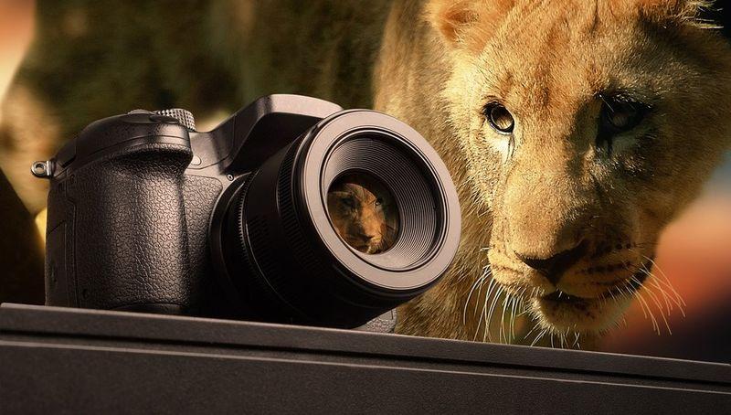 africa-safari-camera