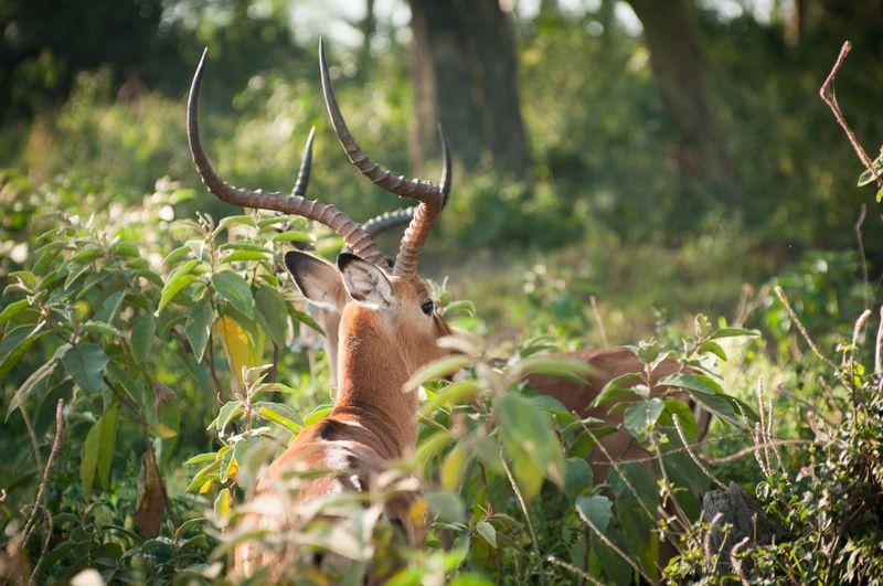 wildlife-lake-nakuru-kenya