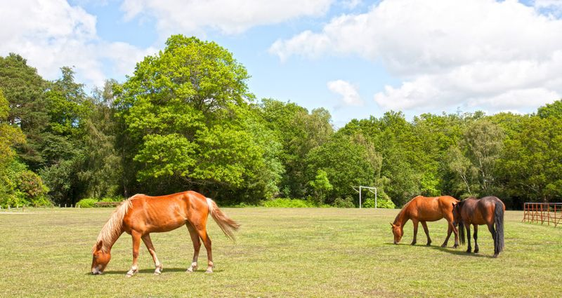 horses in hampshire