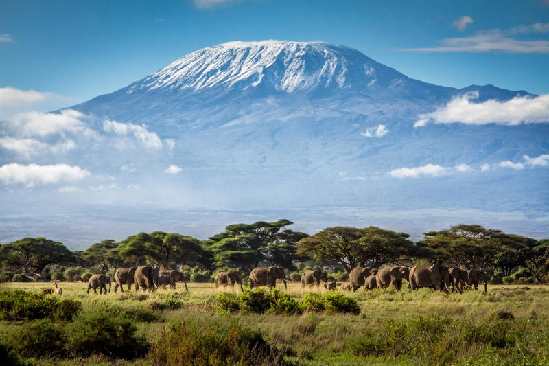 Elephant safari and Mount Kilimanjaro