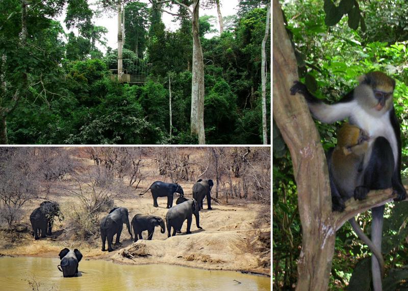 safaris in ghana