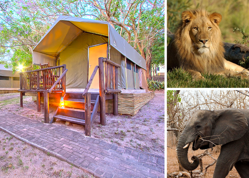 budget safaris in south africa