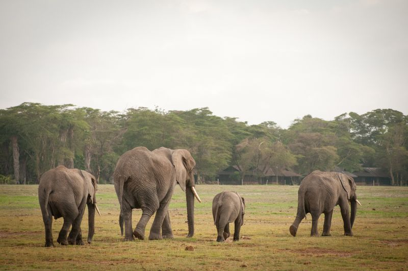 elephants-amboseli-national-park
