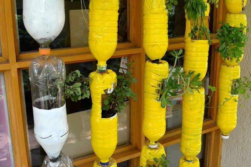 plastic bottles turned flower pots