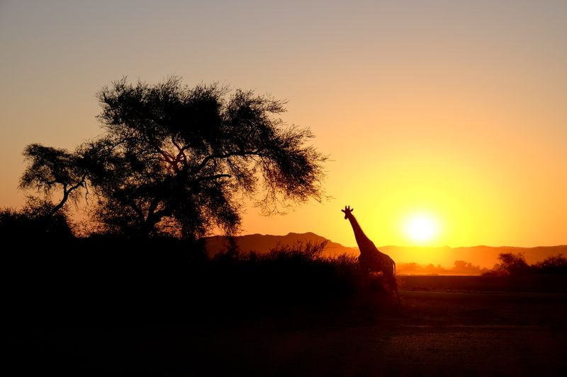 Safari in Namibia