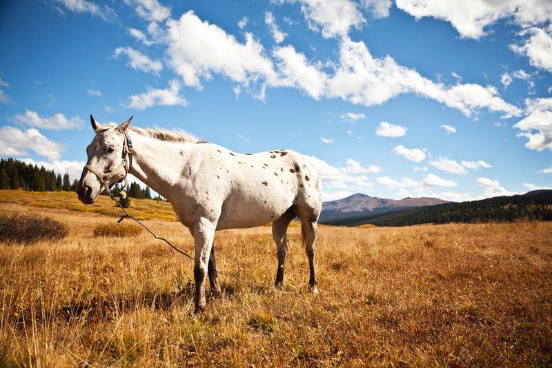 A horse in an open field