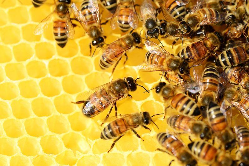 bees spirituality