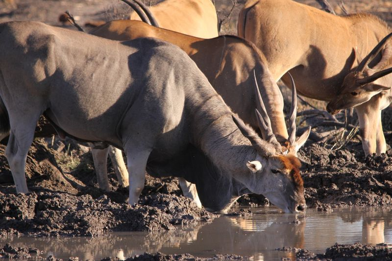 wildlife in Mapungubwe National Park