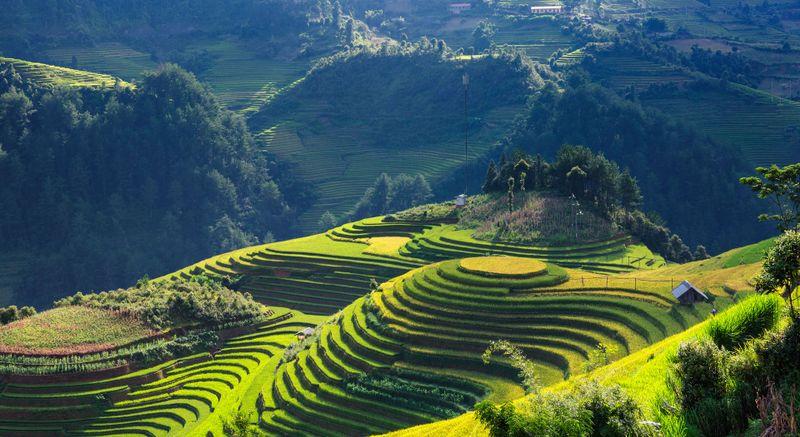 rice-fields-Mu-Cang-Chai-vietnam