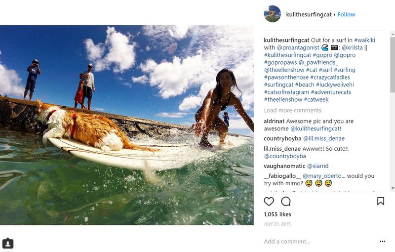 kuli-surfing-cat
