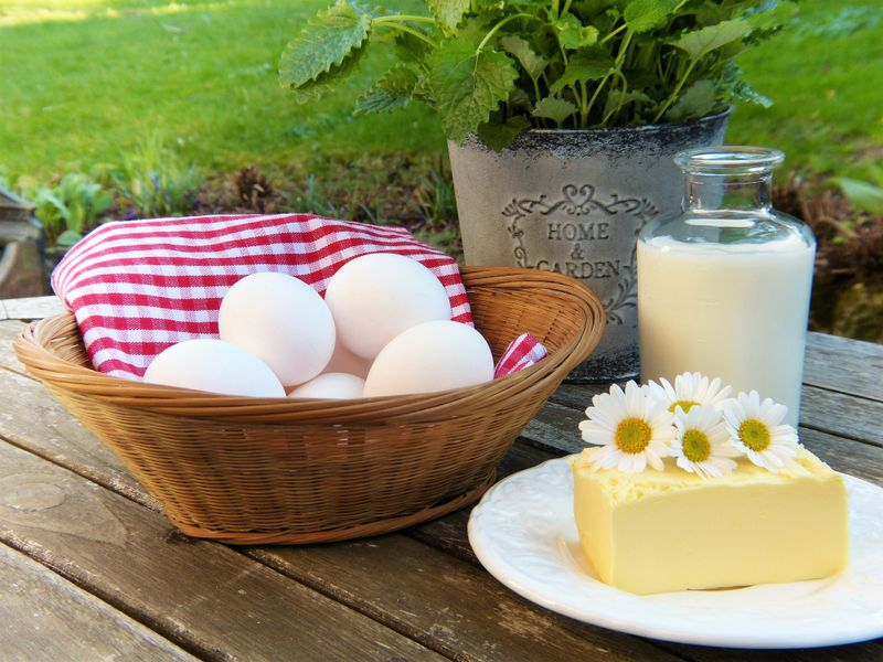 dairy products picnic