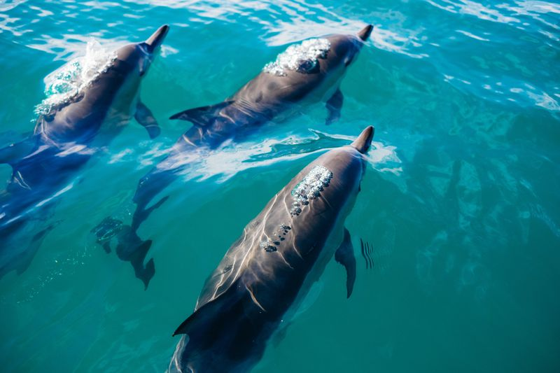 dolphins-kaikoura-new-zealand