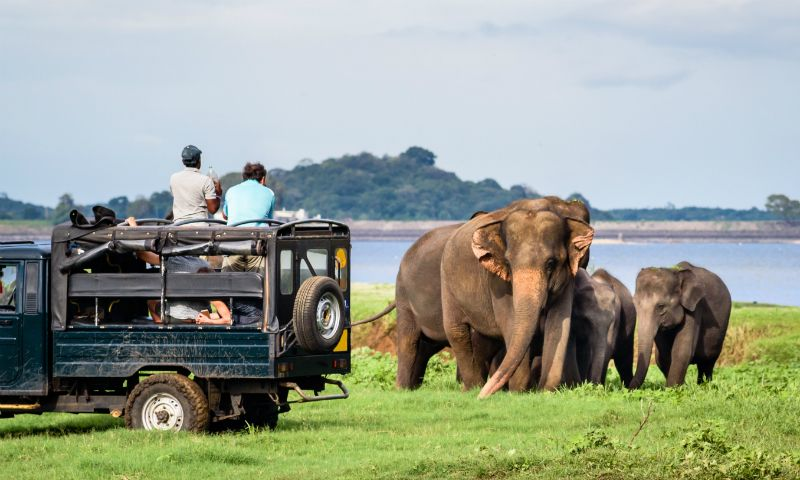 Sri Lanka VS South Africa Safaris