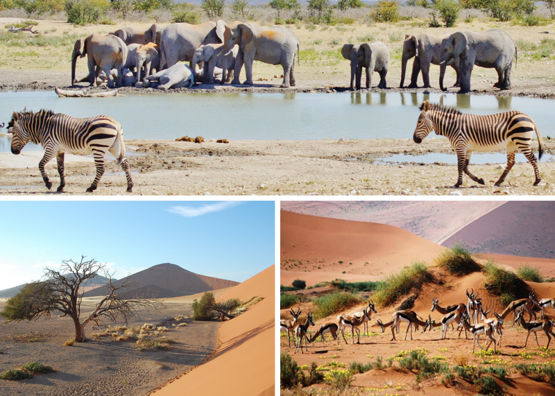 budget safaris in namibia