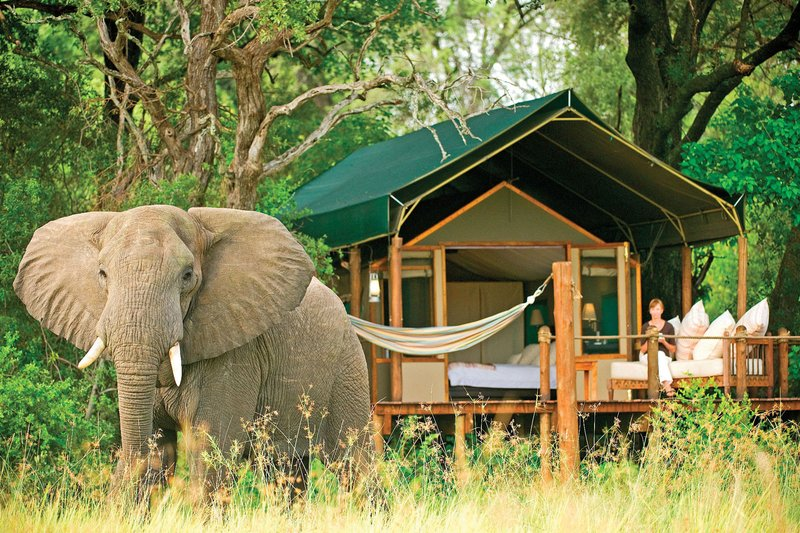 elephant-lodgings-africa