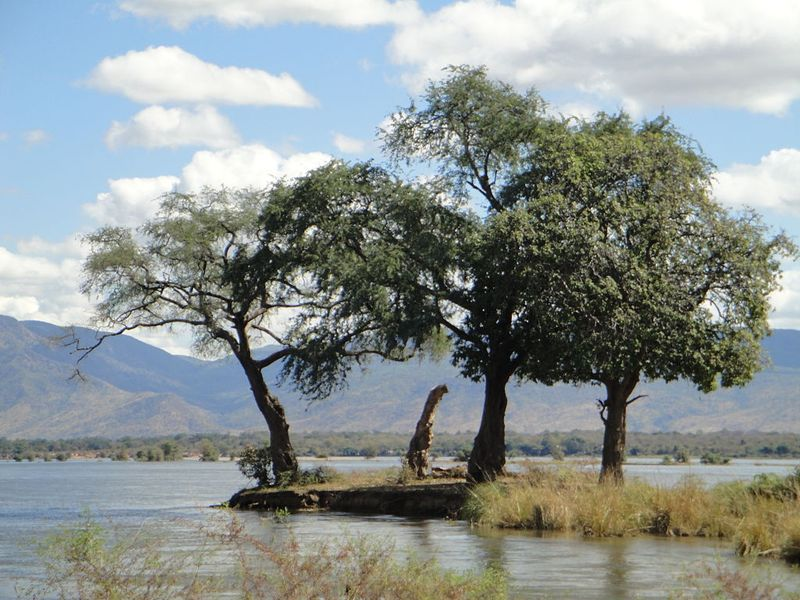 island on the zambezi river in mana pools national park